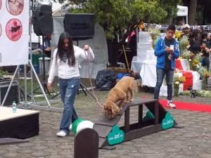 Actividades Caninas