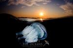 Gallery: Jellyfishes, Calafell (Mediterranean Sea)