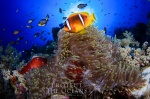 Gallery: Red Sea