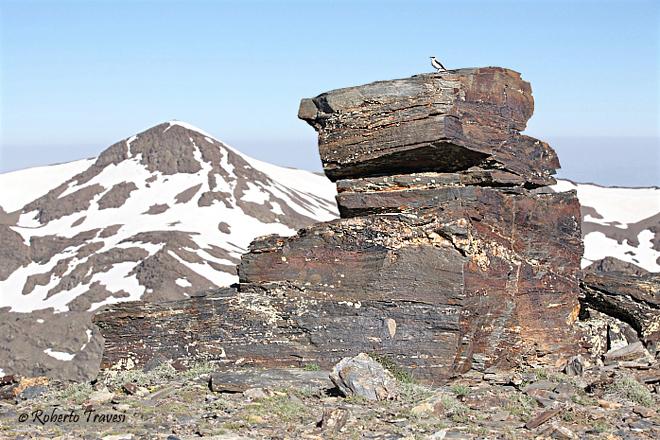 Collalba gris y cerro del Caballo