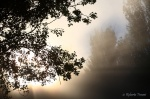 Contraluz en la niebla