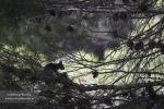 Entre las ramas