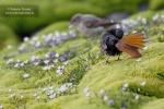 Habitantes del borreguil